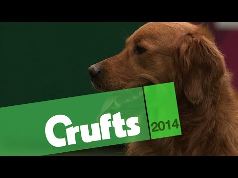Gundog Display | Castlemans Gundogs | Philippa Williams | Crufts 2014