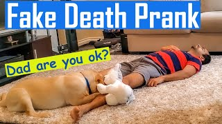 Fake Death Prank on my Labrador Puppy | He Starts Biting Me | Pretending to Faint Prank