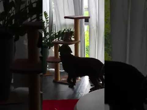 chat et chien féline ( chienne) et mozart (chat)