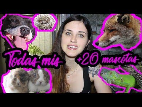 Todas mis +20 mascotas  [🦊,🐰, 🐨,🐸, 🐶,🦔,🐀,🐺,🐜,[ ( ALL MY PETS )