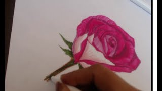 How to draw a rose on paper with color pens ( sorry no music)