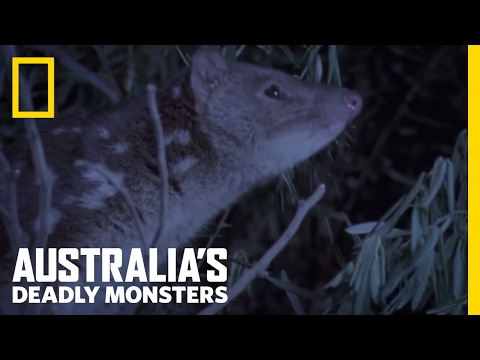 A Tiger with Spots? | Australia's Deadly Monsters
