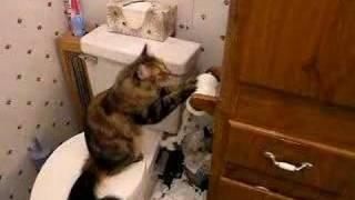 cat unrolling toilet paper