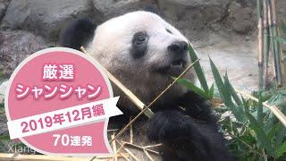厳選シャンシャン70連発 2019年12月編【永久保存版】父しゃん譲りのフリーズ連発のシャンシャン^^  Giant Panda Xiang Xiang