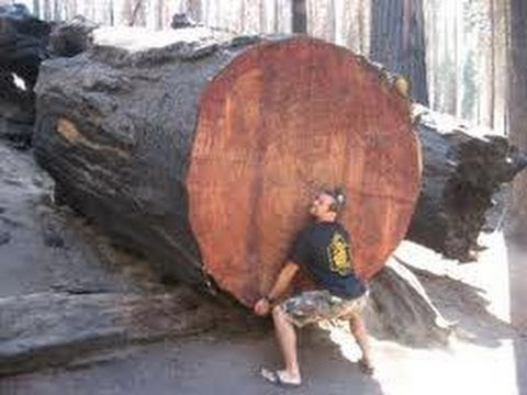 Lifting Heavy Log Like A Lumberjack There Is Life After
