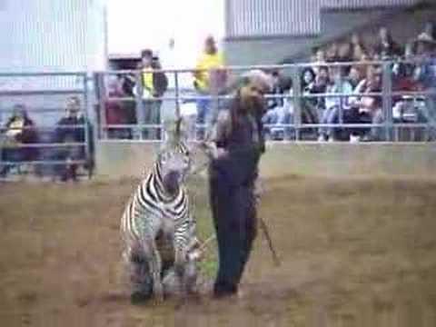 Barcode the Zebra