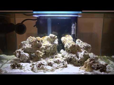 Fluval Edge Reef Tank Series: Part 1