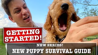 NEW PUPPY SURVIVAL GUIDE: Getting Started! Biting, Potty Training & More! (EP 2)