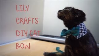 LILY CRAFTS : DIY CAT BOW