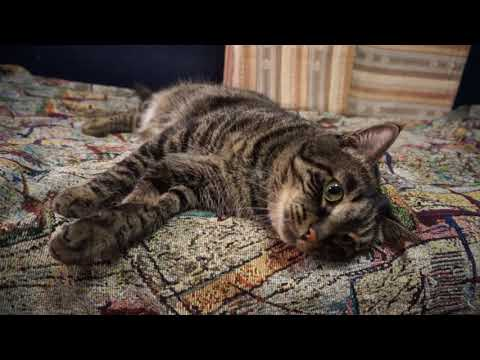 Вопрос: Как заставить кошку молчать?