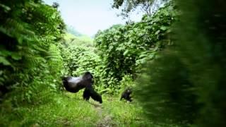 (15秒) 迷霧森林的金剛 - 聚焦烏干達 (全球華文永續報導獎報名作品)