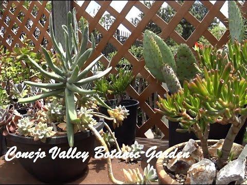Conejo Valley Botanic Garden Tour