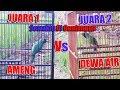 Cucak Ijo Mania Adu Jotos Cucak Ijo Juara 1 Kenarian Jinak Vs Juara 2 Campur Sari Masih Liar Mastering(.mp3 .mp4) Mp3 - Mp4 Download