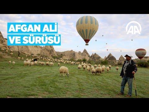 Kapadokya vadilerinin çobanı