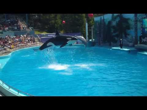 KILLER WHALE AND DOLPHIN SHOW