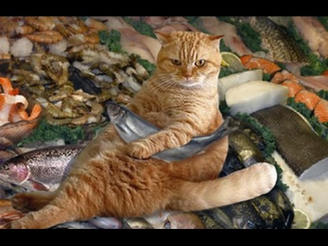 Brave cats - Funny cat Compilation 2017