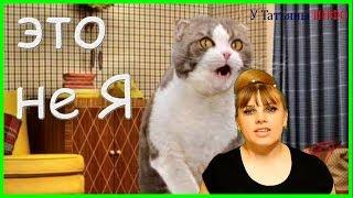 Запах кошачьей МОЧИ: решаем проблему !!!