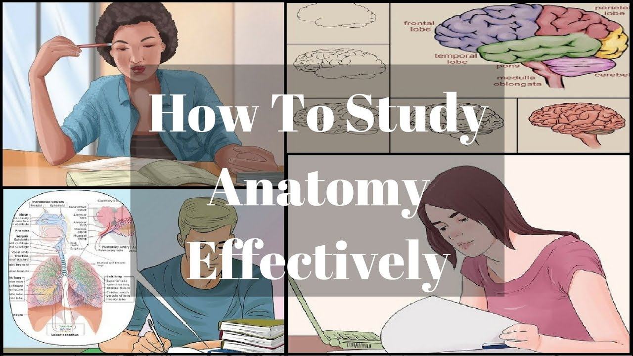 How To Study Anatomy Effectively | MBBS SERIES - YouTube
