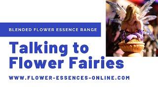 Talking to Flower Fairies