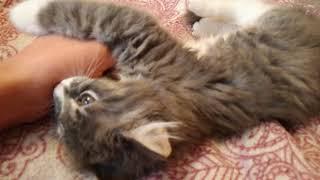 Котенок Кусь кусается 3