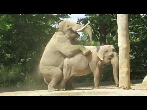 Elefantenbulle Victor Zoo Berlin