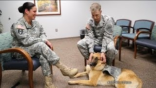 Military Therapy Dogs Aid Soldiers