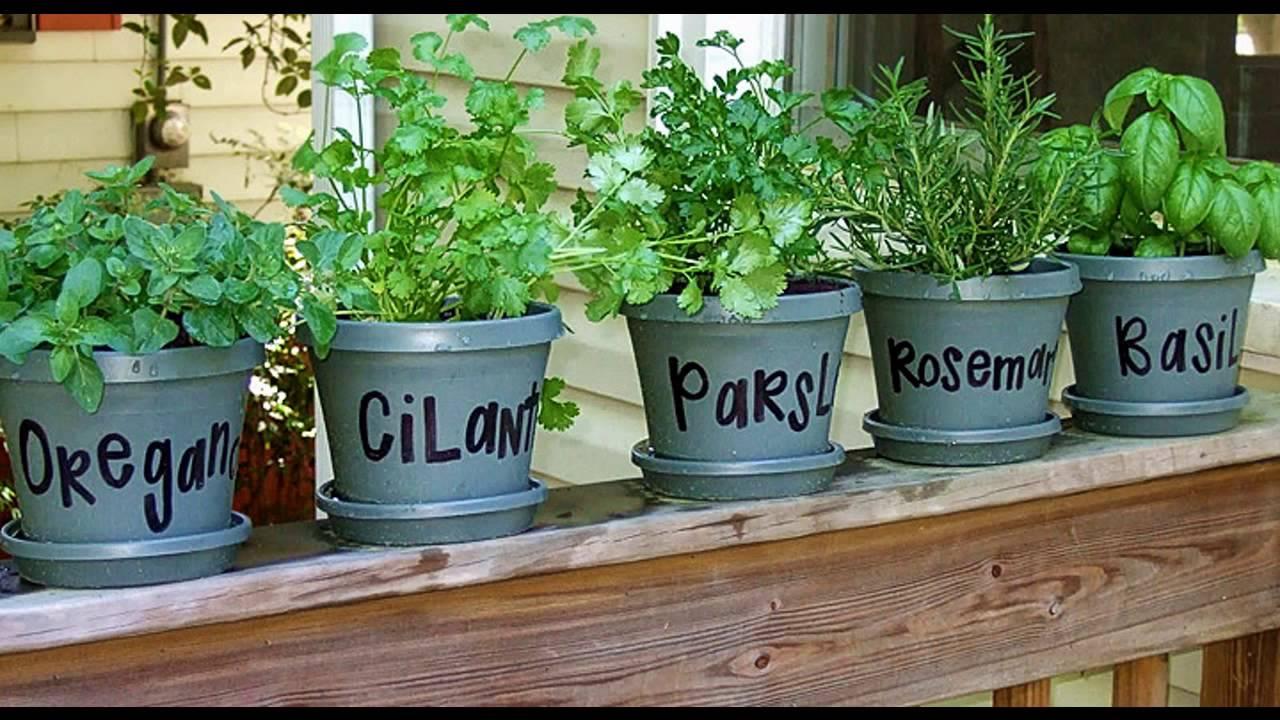 Infochacoonline te aconseja c mo plantar hierbas - Plantar hierbas aromaticas ...