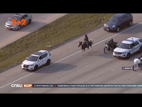СПЕЦКОР | Новини 2+2: Самотній ковбой на коні у годину пік виїхав на автобан американського Чикаго