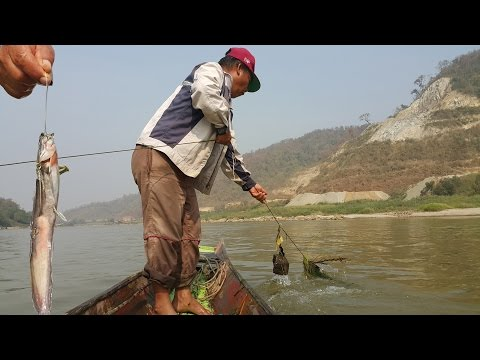 ลงเบ็ดหลาวหาปลาแข้แม่น้ำโขง