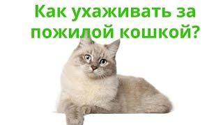 Как ухаживать за пожилой кошкой. Ветеринарная клиника Био-Вет.