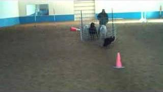 Charley - Herding Clinic - Flanking Training