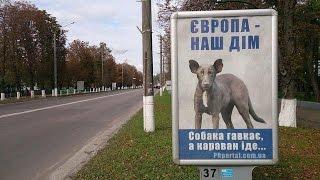 НОВЫЙ ХИТ КОЛОРАДСКОЙ ПРОПАГАНДЫ - в Европе мало женщин и поэтому насилуют собак