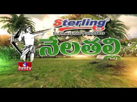 Success Story Of Guntur Chilli Farming- IPM Technology | Nela Talli |  HMTV