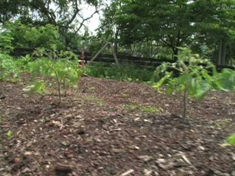 Mountaintop Montessori: Garden to Table