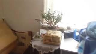 Клопы в квартире,как травить клопов в квартире, (ул.Краснопутиловская.)(, 2017-06-26T17:59:29.000Z)