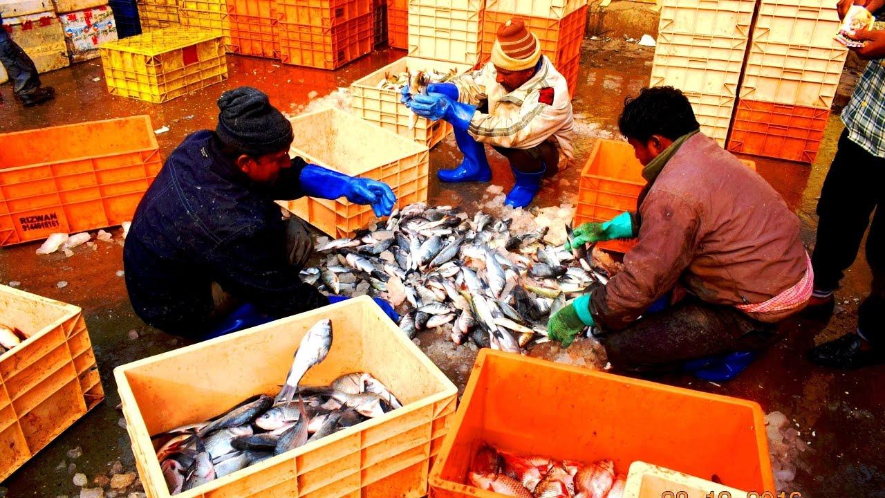 Fish aquarium market in delhi - Fish Market Delhi India By The Tourism School