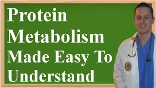 Protein Metabolism: How It Works (Made Easy to Understand)