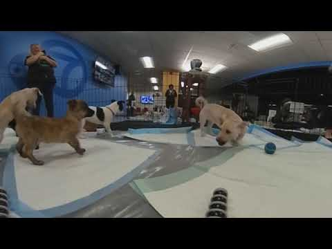 hqdefault - 360 VIDEO: Green Dog Rescue puppies at ABC7