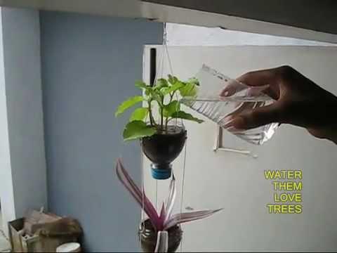 Cách làm chậu cây ba tần thông minh - Handmade Cộng Đồng DIY Việt Nam.flv