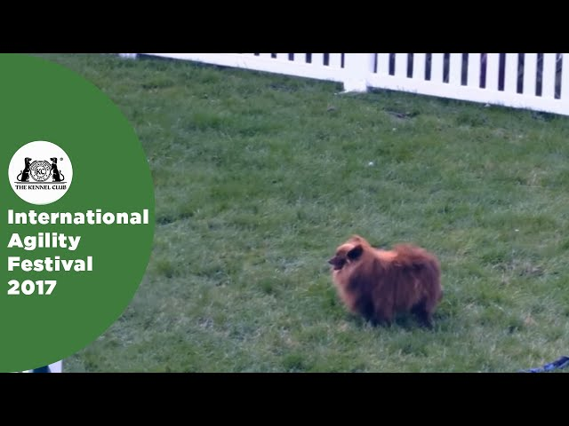 Young Handler of the Year - Small (-12) | International Agility Festival 2017