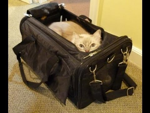 Ragdoll Cats Review Sherpa Airline Pet Carrier Ultimate Bag On