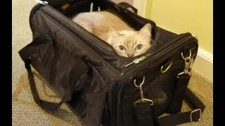 Ragdoll Cats Review Sherpa Airline Pet Carrier Ultimate Bag on Wheels - ねこ - ラグドール - Floppycats