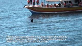 Blue Whales and Orcas. Sri Lanka. 25 November 2013
