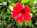 এই স ই ঘর Ai Shei Ghor Tariq Munawar Bangla Islamic Song Sreejon Audio mp3
