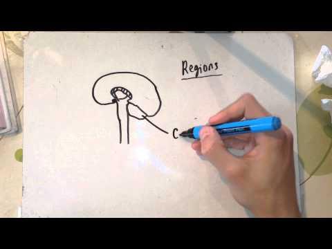 Biology a level f215