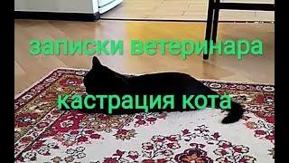 Записки ветеринара. Кастрация кота.