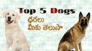 Top 5 dogs prices in India in Telugu | Taju logics