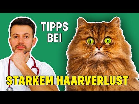 Warum haart meine Katze so sehr?? - Ursachen und Tipps bei starkem Haarverlust bei Katzen