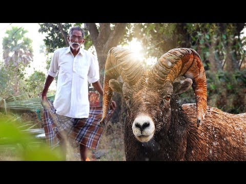 Goat Keema Biryani   Traditional Goat Biryani   Lamb Biryani Recipe By our Grandpa   Grandpa Kitchen