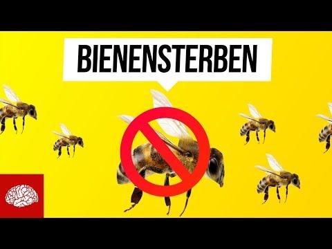 Was passiert, wenn morgen alle Bienen sterben?
